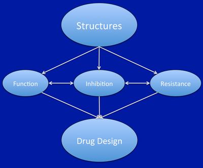 Structural Biology lab of Kalyan Das – Research group of